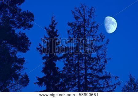 Moon And Trees By Night