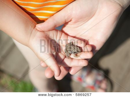 Frog In Child Hand