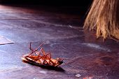 picture of insect  - Dead cockroaches  - JPG