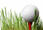 Golf Ball Bin Grass