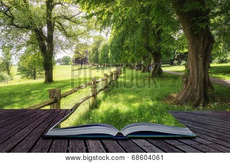 Landscape Image Of Beautiful Vibrant Lush Green Forest Woodland Scene Creative Concept