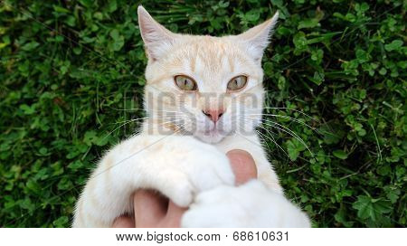 Cat Playing With Hand