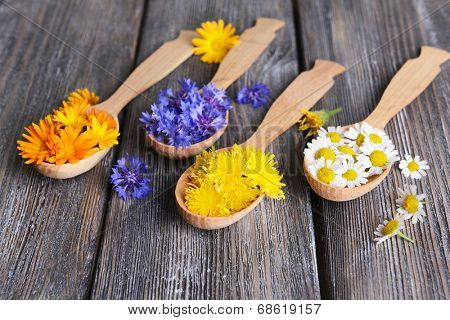 Fresh medical herbs in wooden spoons on table close-up