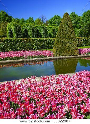 Tulip Gardens In The Keukenhof.