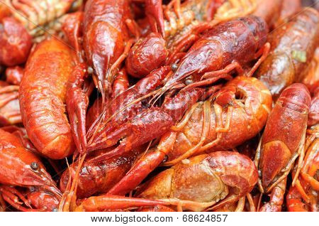Craw Fish