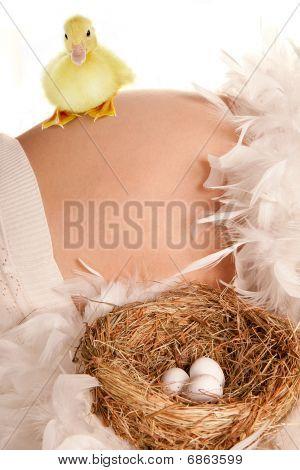 Vientre embarazado con nido y huevos