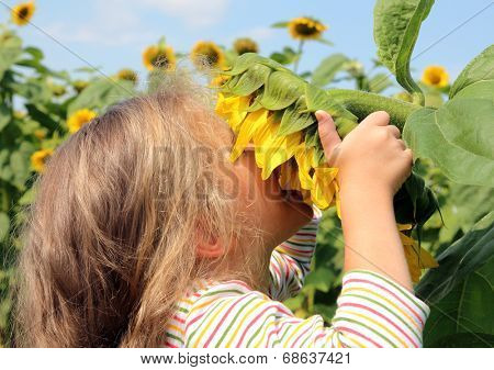 little girl smelling flower of sunflower