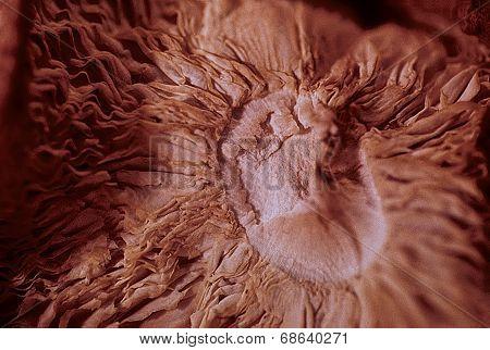Shitake Mushroom Macro