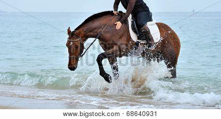 Rider on horseback in the water. Horse hoof spray raises