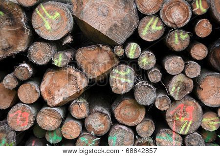 sawed-off tree trunks
