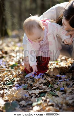 Little Girl Touching Hepatica Flowers