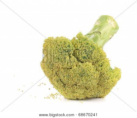 Raw broccoli.