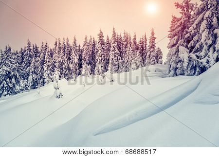 Amazing evening winter landscape. National Park. Carpathian, Ukraine, Europe. Beauty world. Retro style filter. Instagram toning effect. Happy New Year!