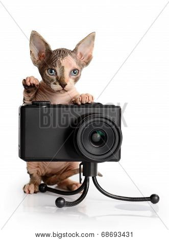 The Canadian Sphynx With Camera