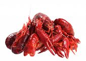 picture of craw  - A group of boiled craw fish isolated on white - JPG