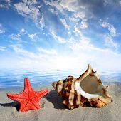 stock photo of conch  - Conch shell with starfish on beach in the sunset - JPG