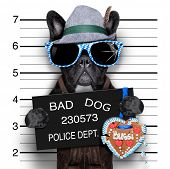 pic of delinquency  - mugshot bavarian dog with a police banner - JPG