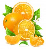 picture of orange blossom  - Fresh ripe oranges with leaves and blossom - JPG