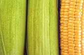 stock photo of corn cob close-up  - Young Ripe Sweet Corn on the Cob close up - JPG