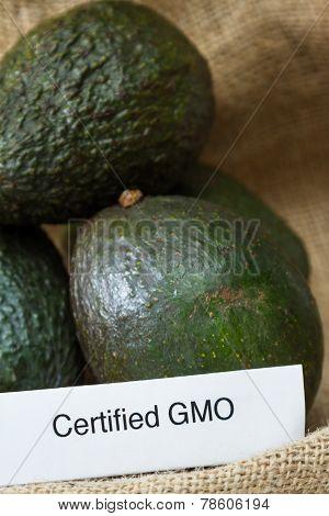 Gmo Avocados