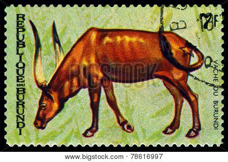 Vintage  Postage Stamp. Animals Burundi, Vache Du  Burundi.