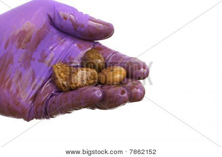 Oil Cleanup Worker Holding Rocks In Hand Isolated
