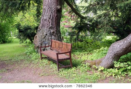 Wooden Bench Under Spruce Trees