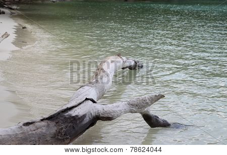 Snag On The Shore Of An Uninhabited Island