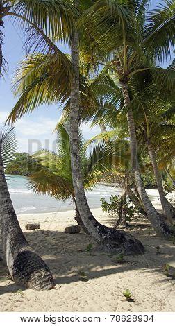 Perfect Beach