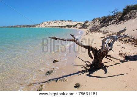 Beach with Dead Tree and Sand Dunes