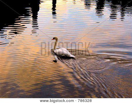 Chateau Swan