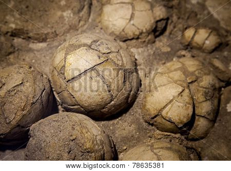 Dinosaur Eggs In The Nest