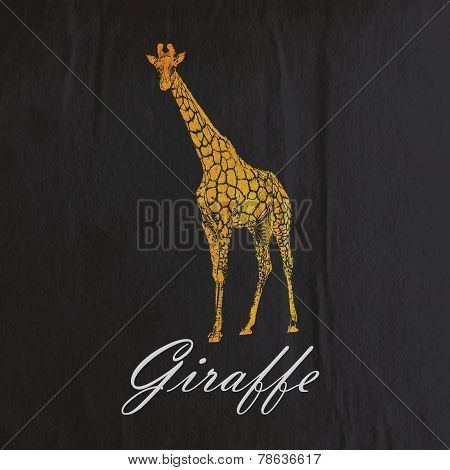 vector vintage illustration of an orange giraffe on the old blac