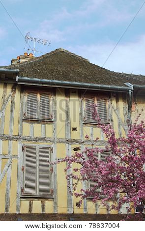 Old tenement and flowering almond tree
