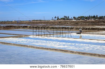 Farmer in Salt field