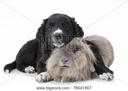Puppy And Rabbit Isolated On White