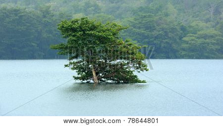 One Lonely Tree On The Banks Of A Lake