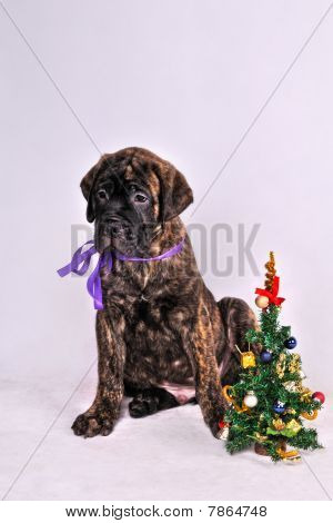 Puppy With A Christmas Tree