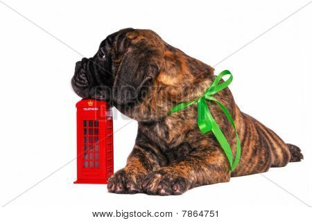 Puppy On A Telephone Booth