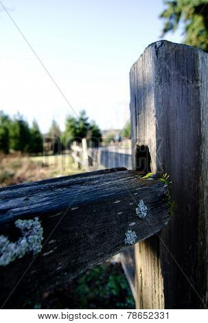 Weathered Fence In Marymoor Park