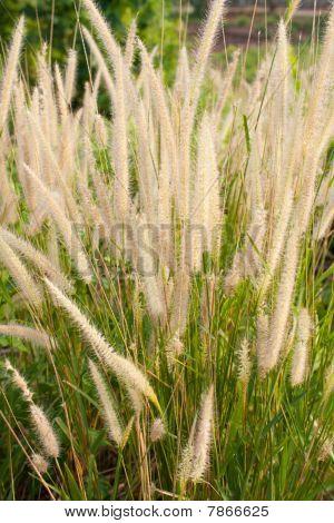 Grass on sidewalk