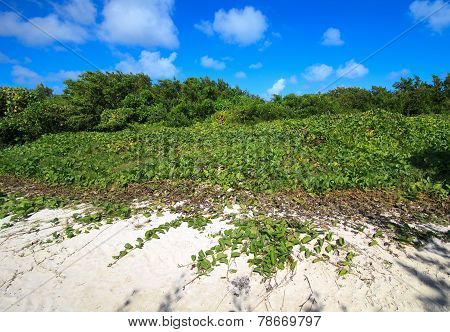Shore was covered with vegetation. Cayo Guillermo. Cuba.