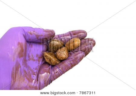 Oil Cleanup Worker Holding Soiled Rocks In Hand Isolated