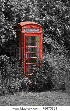 Overgrown british telephone box