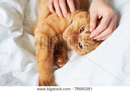female hands caress cat