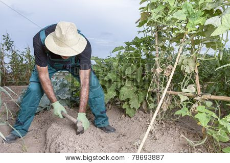 Farmer Sowing The Land