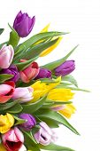 pic of white purple  - Yellow pink and purple tulips bouquet isolated on white - JPG