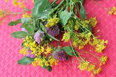 stock photo of red clover  - bouquet of wild flowers of clover and yellow on a red background - JPG