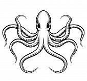 image of octopus  - Vector octopus illustration - JPG