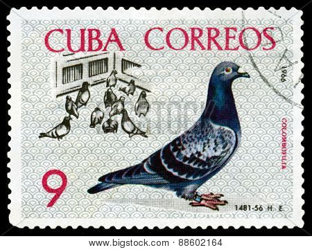 Vintage  Postage Stamp. Birds. Pigeons In Yard.